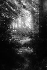 El camino al bosque (Sersio_Photographer) Tags: corua del conde fotografodecoruadelconde fotos con vaselina