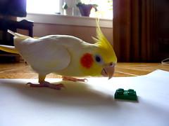 Playing with Lego (fee-ach) Tags: lego bird avian legobricks toy toys buildingblocks