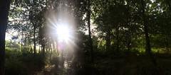 Alone (Jess_Priddey) Tags: photography photo peak grass river stream glare fields woods sky rain water trees sunlight sun