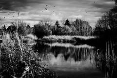 ...ominous signs.. (dawn.tranter) Tags: landscape breathe flight birds imagine reflections water creek feelingsadandorfedup week12 7dos bwwednesday dawntranter