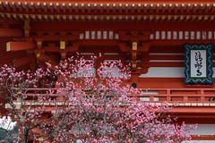 2016.  Kyoto. (Marisa y Angel) Tags: 2016 higashiyama japan japn kioto kiyomizudera kyoto