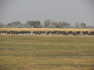 Namibia Dangerous Game Safari - Caprivi Strip 30