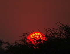 Red Sundowner Sunset, Etosha NP, Namibia, Africa  K__38805 (Mike07922, 3 Million+ Views - thanks guys) Tags: etosha namibia africapentaxk3