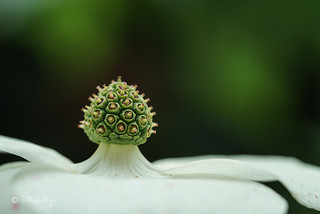 Blüte / Blossom