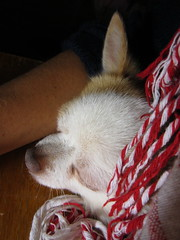IMG_2315 (kosinus190) Tags: dog