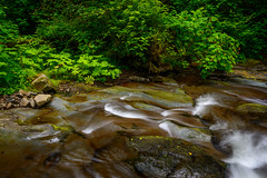 ripple in still water (Sam Scholes) Tags: arch cape landscape soft nature water stream state park oswald west trees beach oregon beautiful motion south green softness westsouth forest blur archcape motionblur oswaldwestsouth oswaldweststatepark statepark