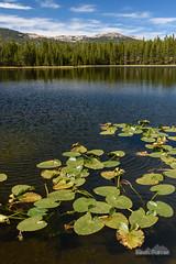 Duncan Lake (kevin-palmer) Tags: bighornmountains bighornnationalforest wyoming fall autumn september nikond750 tamron2470mmf28 cloudpeakwilderness circularpolarizer duncanlake water lilypads green