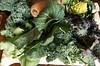 97th Street GreenMarket January 18, 2013 CLS_6249 (smith_cl9) Tags: street new nyc newyorkcity winter nikon december farmersmarket manhattan january grow 11 upper crop greenmarket butternutsquash westside veggies nikkor 18 kale vr raab uws collardgreens dx rapini brassicaoleracea f3556g broccolirabe 97th romanescobroccoli 2013 apsc romancauliflower 18105mm redkale butternutpumpkin d7k 97thst d7000 acephalagroup grownyc botrytisgroup west97thgreenmarket