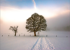 Sunset of 12 12 12. A tree in the fog. No. 1964. (Izakigur) Tags: schnee snow mountains alps liberty schweiz switzerland nc nikon bravo europa europe flickr suisse suiza swiss feel jura neige helvetia nikkor 1001nights svizzera neuchatel neuchtel lepetitprince ch berna dieschweiz musictomyeyes  sussa suizo magictree chauxdefonds romandie suisseromande  lachauxdefonds myswitzerland lasuisse  abigfave cantondeneuchtel d700  nikond700 izakigur cantonofneuchatel suisia stromae laventuresuisse bestcapturesaoi 1001nightsmagiccity mygearandme izakigurneuchtel rememberthatmomentlevel1 izakigur2012 izakigurd700