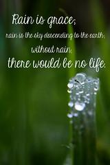 No snowflakes, just rain drops (zoej1983) Tags: macro reflection water grass rain outside quote pad photoaday droplet jewels raindrop