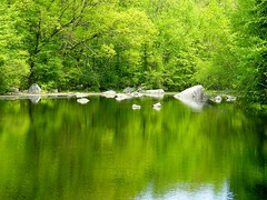 Green Reflection (Stanley Zimny) Tags: lake reflection tree green rock 1025 reflexions