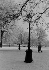 dutch winter (100) (bertknot) Tags: winter dutchwinter dewinter winterinholland winterinthenetherlands hollandsewinter winterinnederlanddutchwinter