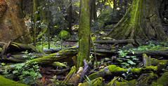 Forest Floor    SOUTH EAST QUEENSLAND (rhyspope) Tags: light panorama plant tree green wet water rock creek forest photoshop canon fence river dark waterfall nationalpark moss bush woods rainforest stitch ripple pano australia naturalbridge clean qld queensland cave aussie hdr merge blend springbrook cs3 500d rhyspope