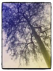 Skeleton Tree (peregrine blue) Tags: tree nature naturewalk flowerpicking