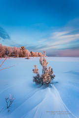 Winter's Splendor #5 - Frosted (Thousand Word Images by Dustin Abbott) Tags: blue trees winter light ontario canada cold tree ice beautiful clouds sunrise river pembroke dawn cool frost atmosphere handheld ful
