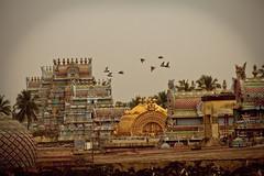 Srirangam Temple (sureshs!) Tags: river island temple gold made sri kaveri fully trichy srirangam gopuram ranga cauvery ranganathaswamy divyadesam sriranga sriranganathaswamytemple ranganathar thiruvarangam 108divyadesam srirangamisfamous srivaishnavites therajagopuramandis236feet72mtall thetallestinasia