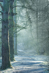 Frosty Woodland Walk (jillyspoon) Tags: wood trees winter sun cold tree path walk branches sunny frosty harrogate sunrays bilton rivernidd theniddgorge