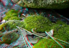 P1050520-MossInYard-GH2 (EdwardMitchell) Tags: red canon lumix stereoscopic 3d spokane cyan anaglyph powershot sx1 gh2
