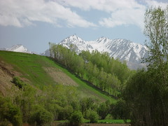 Reforestation Efforts, Bamiyan - Afghanistan (UNEP Disasters & Conflicts) Tags: afghanistan unepmission development disaster deforestation drought conflict peace poverty pcdmb peacebuilding climatechange reforestation unep unenvironment