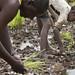 ©FAO/Giulio Napolitano / FAO