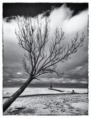 Foster Beach Winter (lanskymob) Tags: winter snow chicago tree frozen lakemichigan foster shore