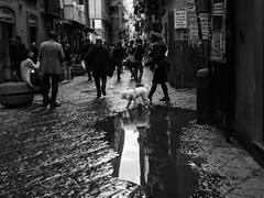 dog reflex (MarioMancuso) Tags: life road street city people blackandwhite bw italy woman dog white black way person photography mono photo reflex shot documentary olympus naples streetphoto 18 omd reportage wolk monocrome 17mm