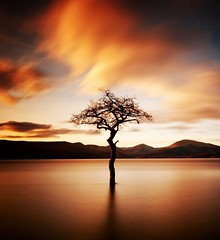 """That tree"" at Milarrochy, Loch Lomond (Semi-detached) Tags: winter sky tree weather silhouette clouds that landscape bay scotland afternoon warmth scottish scene filter loch submerged lomond trossachs density neutral balmaha topseven nd1000 superaplus aplusphoto milarrochy sunsetmania micarttttworldphotographyawards micartttt rmg:tag=rj47q"
