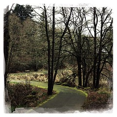 """#path #woods #trees #park #pnw • <a style=""""font-size:0.8em;"""" href=""""https://www.flickr.com/photos/61640076@N04/8583760040/"""" target=""""_blank"""">View on Flickr</a>"""
