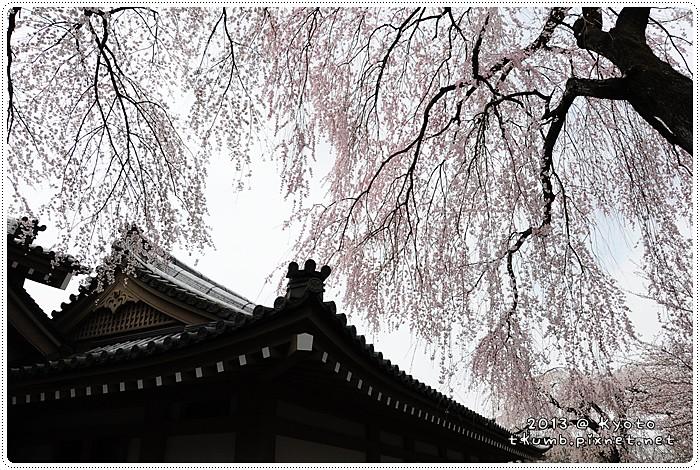 醍醐寺 (9).jpg
