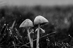 Morning Magic (pandawizard) Tags: morning blackandwhite bw nature mushroom nikon d70 wildlife explore richmondpark