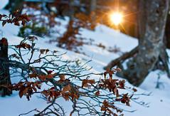Snowy forest sunset (_Franck Michel_) Tags: sunset sun snow cold tree soleil neige arbre froid couché mygearandme