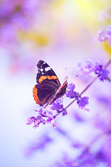 (ingrid.schnelle) Tags: canon eos 5d mark ii ef100mm f28l macro is usm butterfly dof closeup details summer flower nature plant small wonders garden