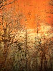 The Orange Trees on the Lake (Gianmario Masala) Tags: textures textured photoshop gimp blur blurry colour photograph gianmariomasala trees cracked orangetone sky colourful