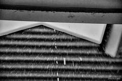Heavy Rain (snakecats) Tags:       monochrome blackandwhite rain heavyrain torrentialrain
