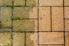 147657098 (sarahvardy) Tags: attheedgeof brick brown clean closeup contrasts cracked deck dirty floor grass improvement macro patio pink red rust stained variation washing weed unstained