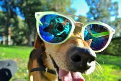 Fido (Fiukky) Tags: dog park fido sunglasses mirror camera funny unexpected sunny
