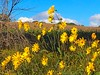 Wildflowers Along the Trail (CCphotoworks) Tags: explored outdoors nature flowers september niceweather westher landscape scenics yellowwildflowers yellow