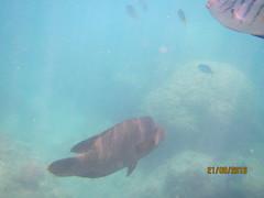 Manta Ray Bay 10
