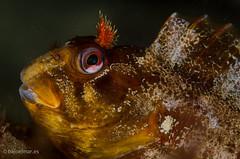 DSC_6847 (bajo_el_mar) Tags: 2016 asturias cantbrico lastres underwater fotosub
