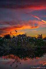 Sunset at the Rookery (DonMiller_ToGo) Tags: cloudsonfire cloudporn rookery sunsets nature reflection birds goldenhour d5500 lake florida wildlife fireinthesky clouds onawalk sky outdoors birdwatching sunsetsniper sunsetmadness venicerookery sunset