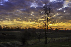 Thanksgiving Sunrise (Morrow Cove) Tags: thanksgiving ranch morning blue horses orange tree green grass clouds sunrise canon fence landscape dawn illinois photographer purple horizon pasture hillside posts colchester lightroom electricfence 60d canoneos60d lightroom4