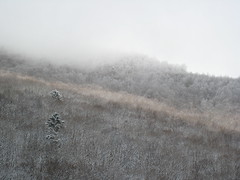 Nagano Trip (miki *) Tags: trip winter mountain snow tree nature canon landscape view nagano okuhida ixy900
