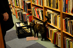 Bookstore Cat (AnaFez) Tags: seattle travel usa cats cat vintage photography book washington nikon library hipster kitty books fremont bookstore indie librarian d5100