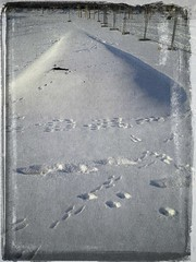 Spuren (thmlamp) Tags: schnee snow berlin germany deutschland outdoor indoor gwb inoutdoor guessedberlin берлин erikistderbeste gwbatineb ratenmachtspas 29012013