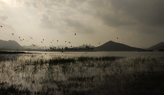 Water Pigeons and Hills (Amar Lalta) Tags: travel india water photography blog asia pigeons hills udaipur amar rajastan lalta lphills