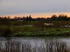 Landscape - Kollmar   Schleswig-Holstein, Germany (hellimli) Tags: germany landscape deutsc