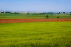Campos manchegos (A. Gálvez Photography) Tags: red verde green arbol rojo poppies castillalamancha amapolas canon60d