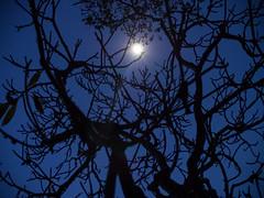 Moon Silhouette Factory (Magic Pea) Tags: blue sky moon tree silhouette night photography photo burma myanmar nightsky magicpea