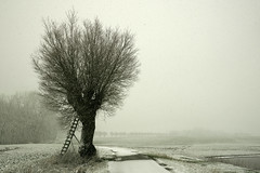 Snow Flurry III (parkerbernd) Tags: road trees winter sea snow storm weather silhouette germany landscape lumix stand high offroad blind empty seat baltic panasonic hide flurries ladder flakes leafless flurry schleswigholstein raised stance leiter hochsitz ostholstein gx1