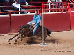 IMG_2003 (DesertHeatImages) Tags: arizona men phoenix cowboys women boots wrestling hats lgbt rodeo poles steer cowgirls bullriding regional roadrunner 2013
